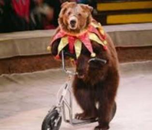 França decide proibir animais em circo